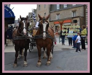 deux beaux chevaux que j' ai admirés  DSC_00361-300x245
