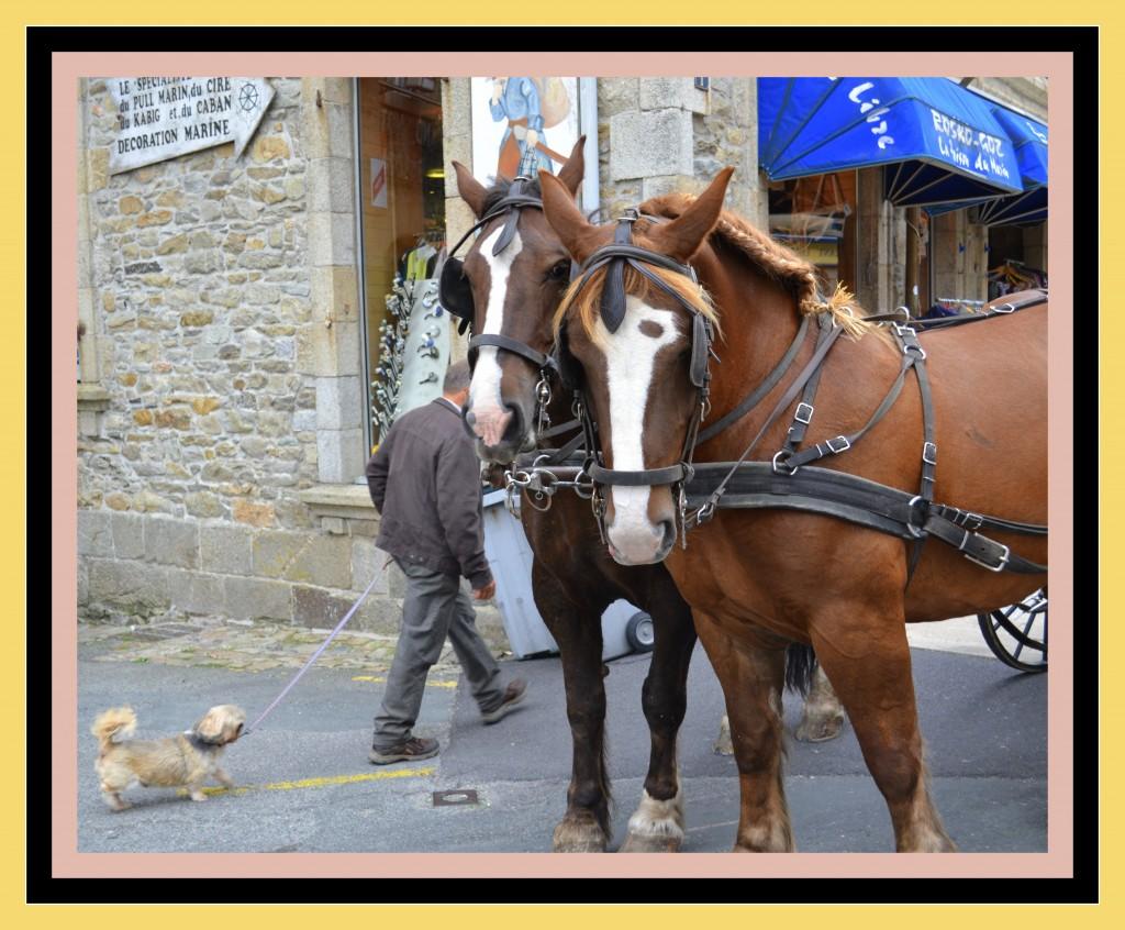 les chevaux de la caléche  DSC_00391-1024x846