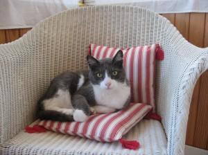 c est lui le chef  sur son fauteuil  img_2816-300x224